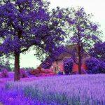 Provence Rotası- Haziran 2017